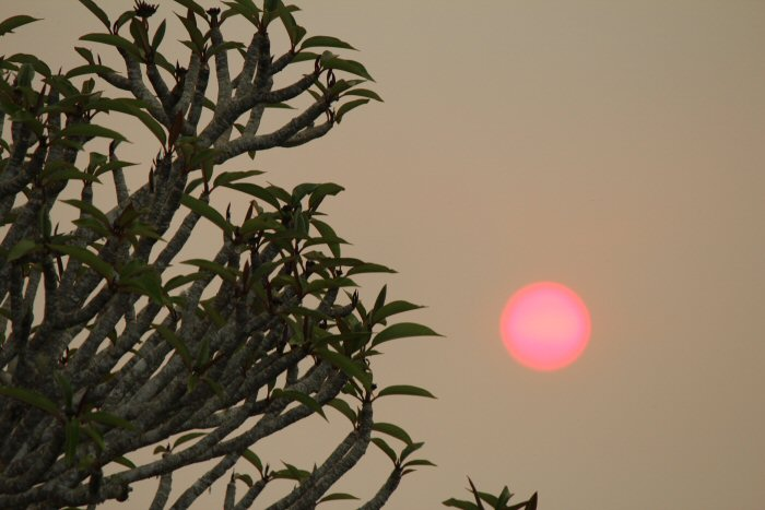 Urunga Sun Going Down During Bush Fire 1